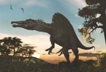 Photo of A dinosaur bigger than the Tyrannosaurus found in Morocco!?