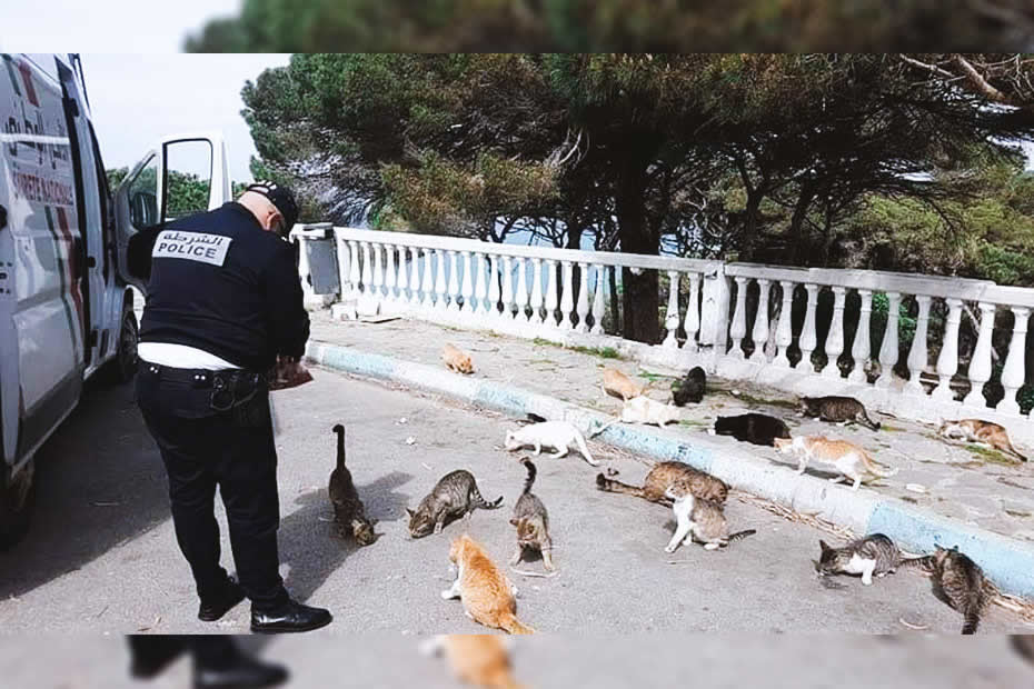 Moroccan police man given food to homeless cats because of the covid-19 pandemic