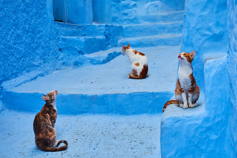cats in streets of morocco